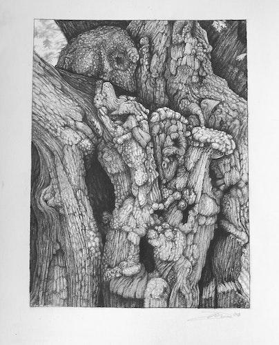 The Old Oak, Broceliande
