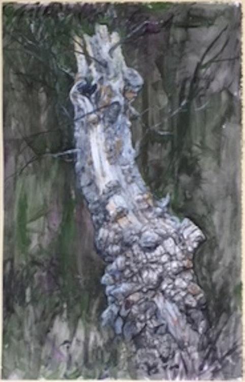 Apple Tree Stump