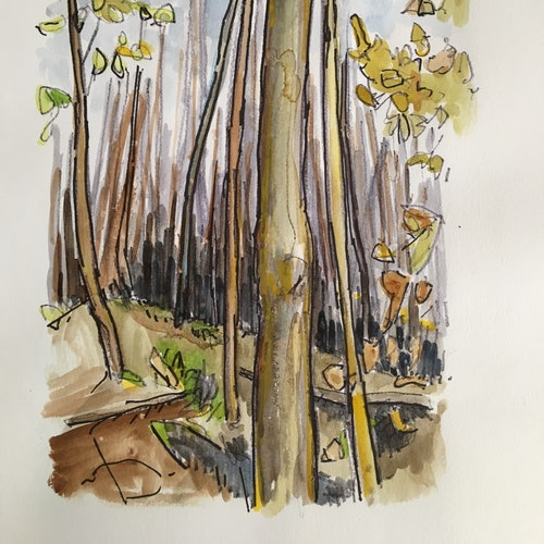Wilket Creek Sketch