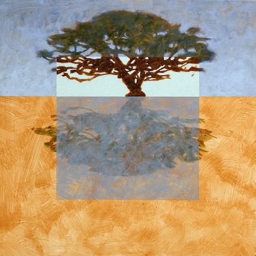 Acacia Reflection