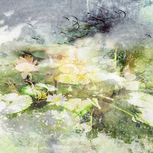 Water Lily Garden III