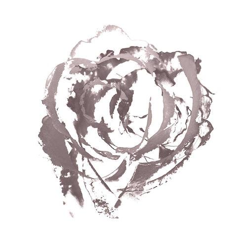 Rose Gray