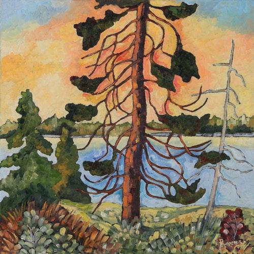 September Sky with Pine
