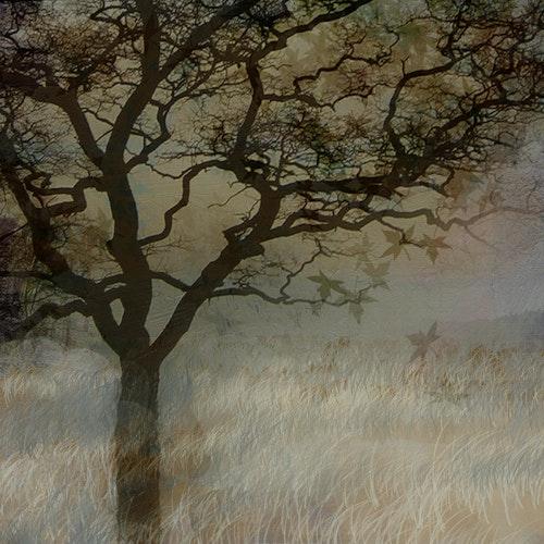 Apricot Evening Gray