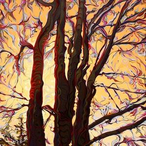 Sun-Shielding GallanTrees
