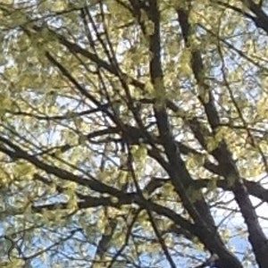The Joyful TreeLease