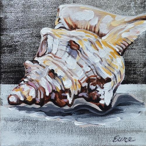 Horse Conch II