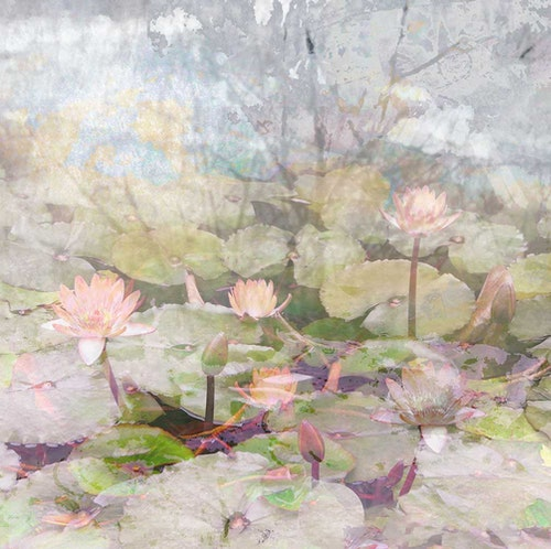 Water Lily Garden I