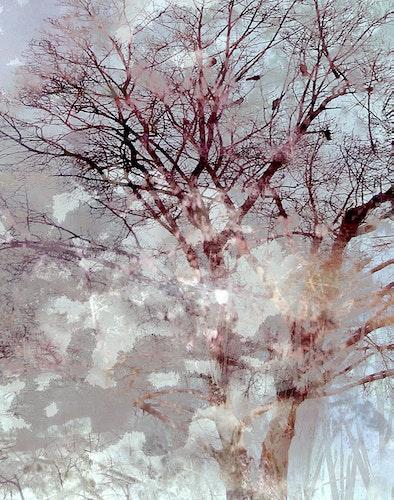 Misty Branches Dawn