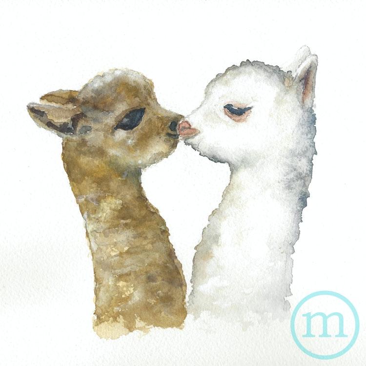 Young Alpaca Love 10 x 10 Sold