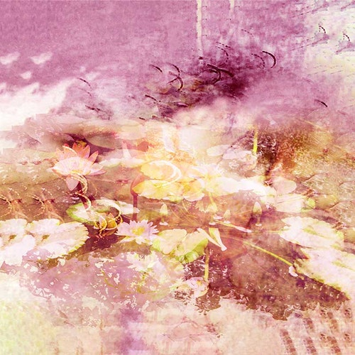 Water Lily Garden III Pink