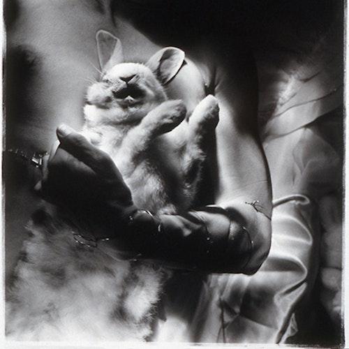 Untitled (Self-portrait with rabbit)