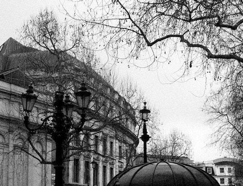 Paris Branches