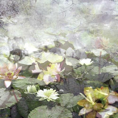 Water Lily Garden II