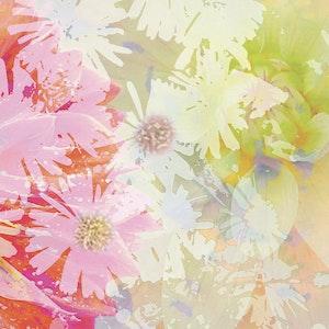 Summer Garden - Series 1-3