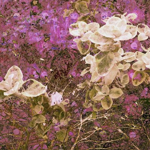 Garden with Violet Circles, Var.10 - Darker Pink with Petals