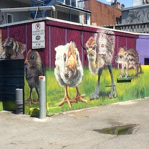 Urban Farm Babies