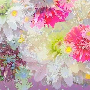 Summer Garden - Series 4-6