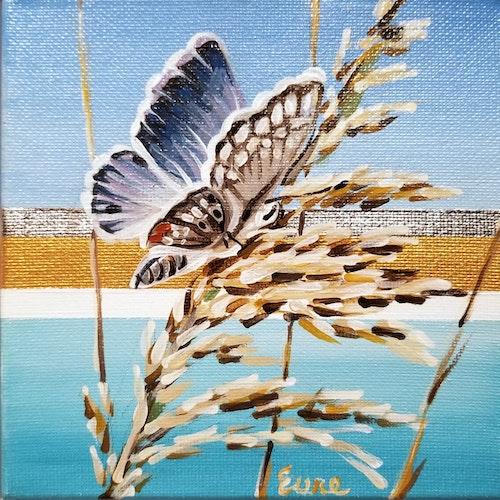 Beach Butterflies - Miami Blue II