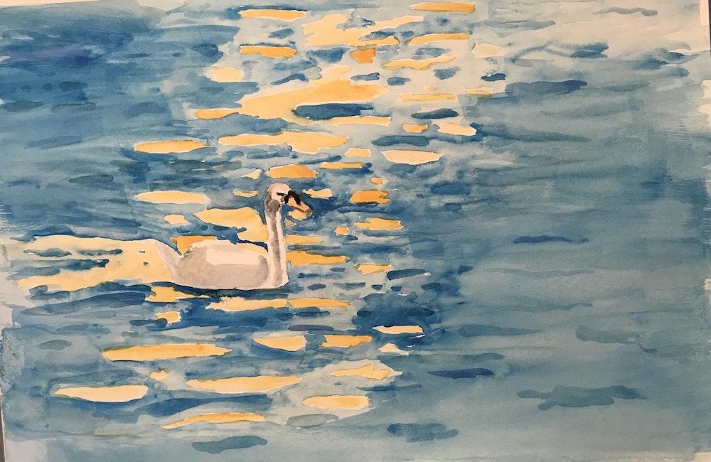 The Swan, Brugge, Belguim