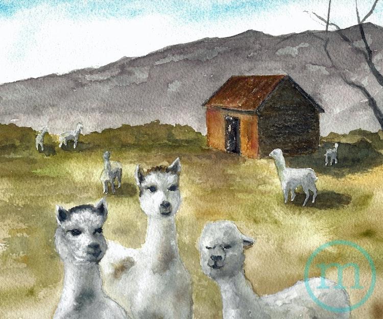Alpaca Farm Life