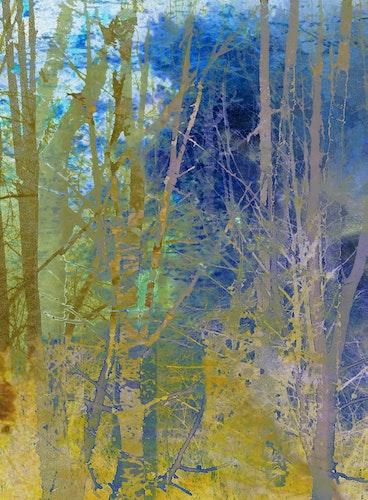 Secrets of Trees Blue