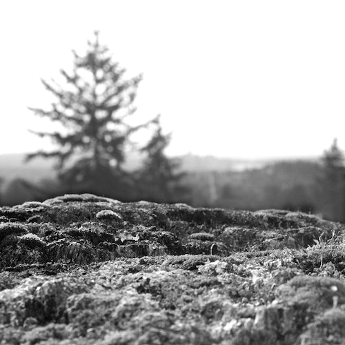 Nature Mossy Rock