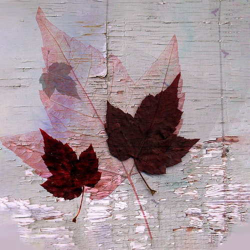 Autumn Leaf Collage Square