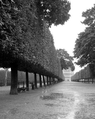 Paris Tree Lined Walk