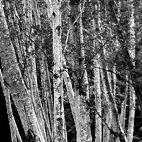 Trees Long Horizontal