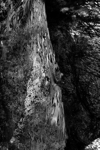 Overflow (Variation: Forest Dark)