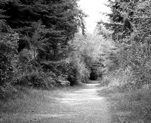 Walk in the Woods B&W Photo