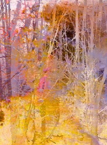 Secrets of Trees Sunshine