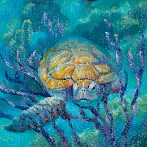 Turtle Naps