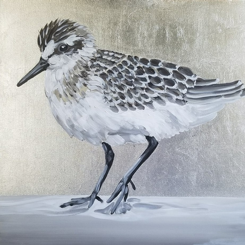 ● Silver Sanderling