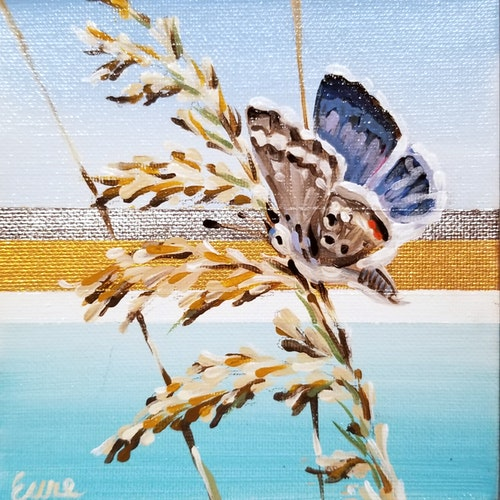Beach Butterflies - Miami Blue III