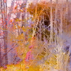 Secrets of Trees Dusk