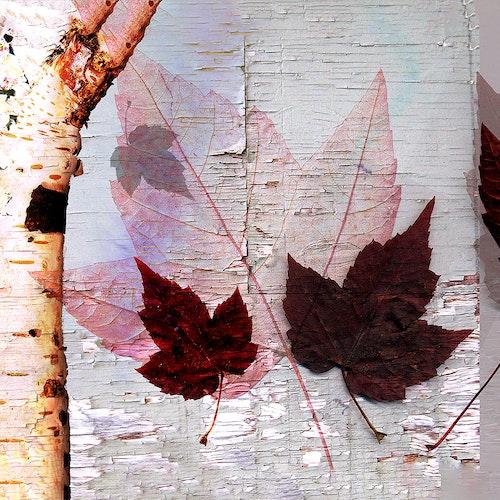 Autumn Leaf Collage Long