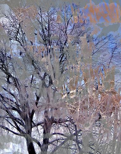 Red Trees, var.2 - Neutral