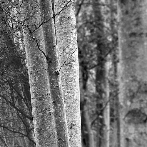 Woodland 5